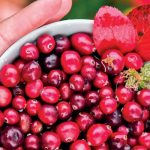 Cultivating new life for cranberries