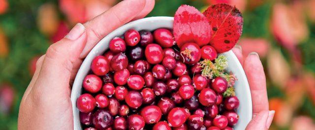 cranberries-feature