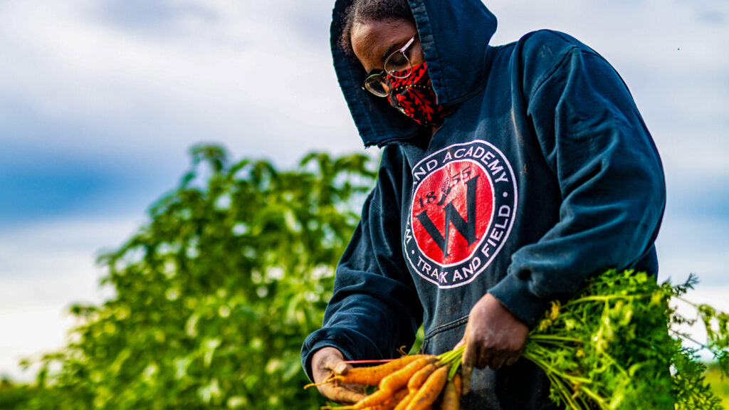student in a mask harvests carrots at Lafayette College's LaFarm